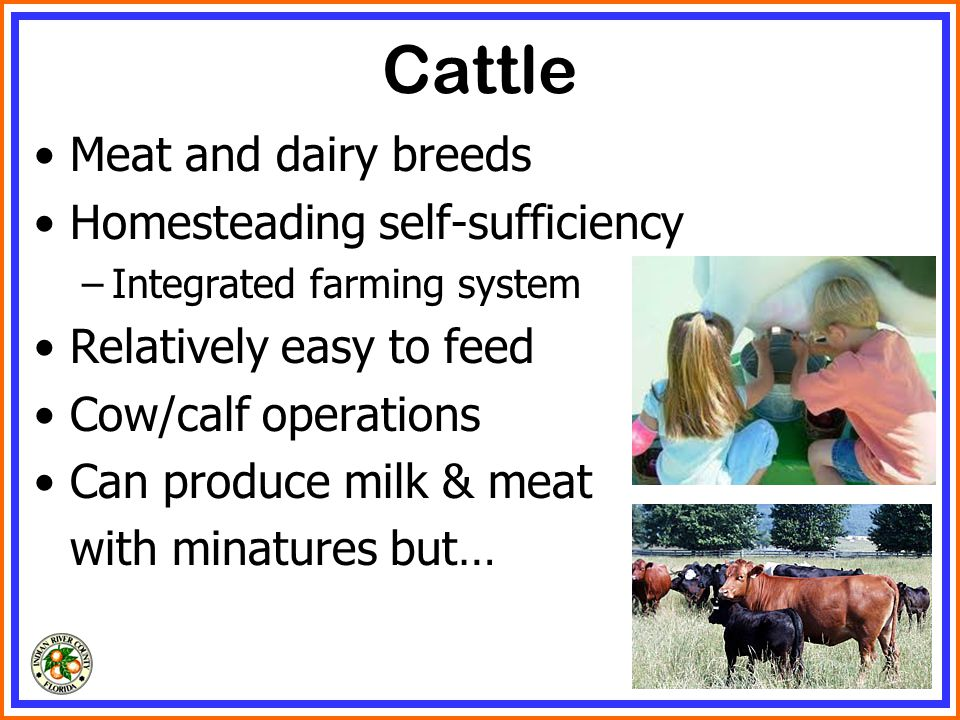 Cattle Meat and dairy breeds Homesteading self-sufficiency –Integrated farming system Relatively easy to feed Cow/calf operations Can produce milk & meat with minatures but…