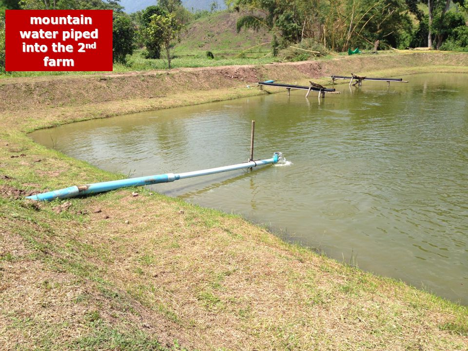 mountain water piped into the 2 nd farm mountain water piped into the 2 nd farm