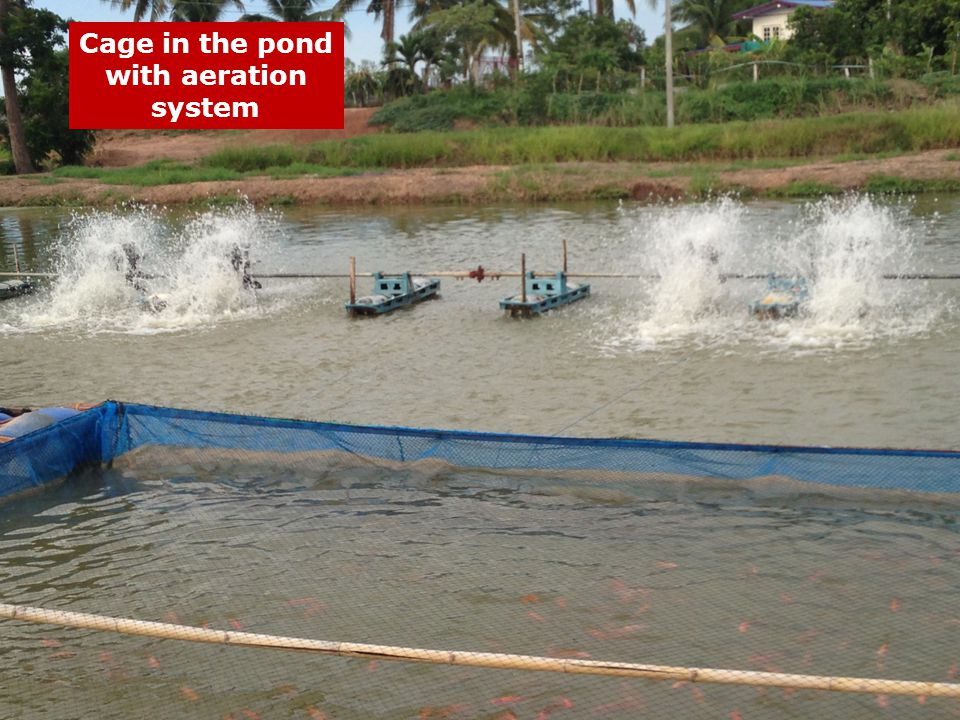 Cage in the pond with aeration system