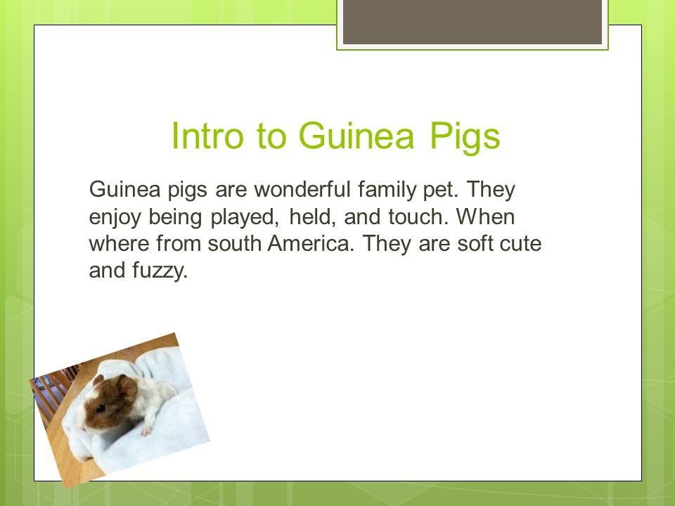 Table of Contents  Intro to Guinea Pigs  Breeds of a guinea pig  clean a guinea pigs cage  What guineas eat  Treats  Sick or hurt Help.