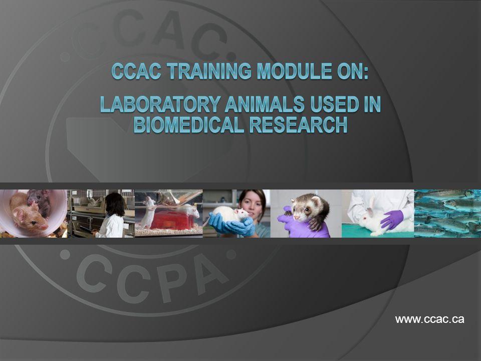 www.ccac.ca
