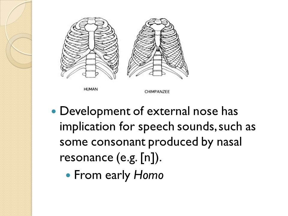 Development of external nose has implication for speech sounds, such as some consonant produced by nasal resonance (e.g.