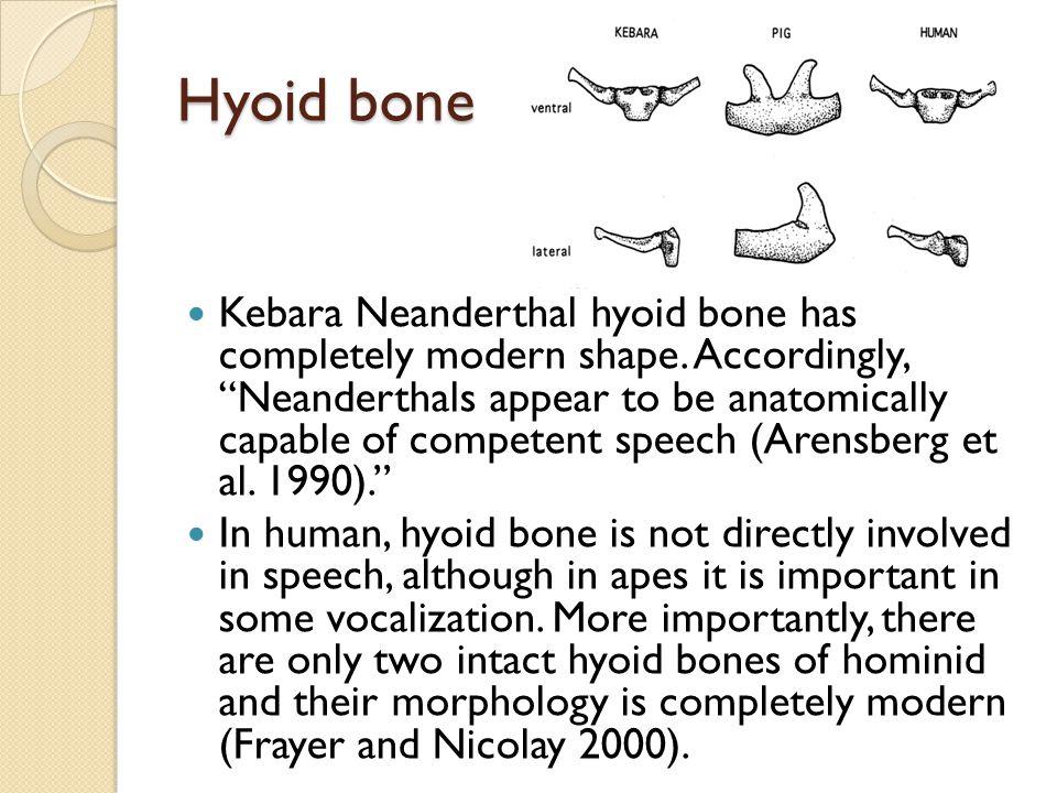 Hyoid bone Kebara Neanderthal hyoid bone has completely modern shape.