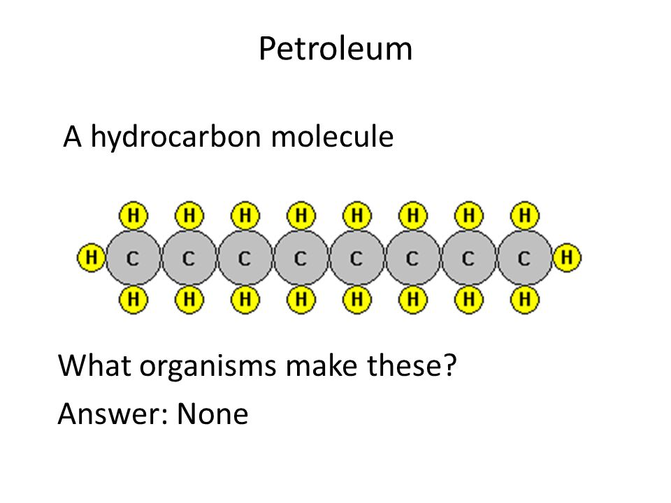 Petroleum A hydrocarbon molecule What organisms make these? Answer: None