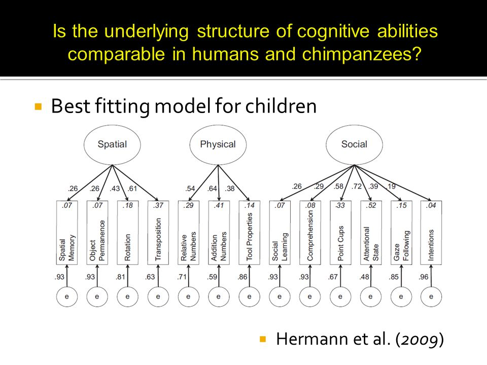  Best fitting model for chimpanzees