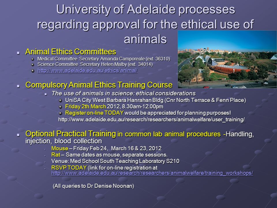 University of Adelaide processes regarding approval for the ethical use of animals Animal Ethics Committees Animal Ethics Committees Medical Committee :Secretary Amanda Camporeale (ext.