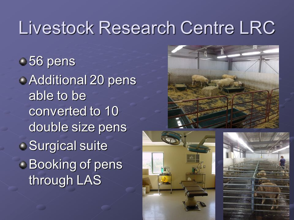 Livestock Research Centre LRC 56 pens Additional 20 pens able to be converted to 10 double size pens Surgical suite Booking of pens through LAS