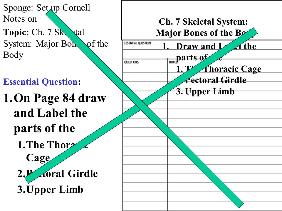 Sponge: Set up Cornell Notes on Topic: Ch. 7 Skeletal System: Major Bones of the Body Essential Question: 1.On Page 84 draw and Label the parts of the