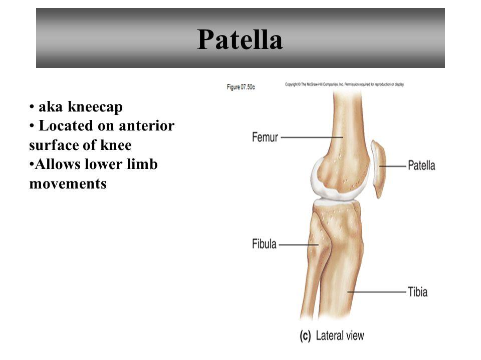 25 Patella aka kneecap Located on anterior surface of knee Allows lower limb movements