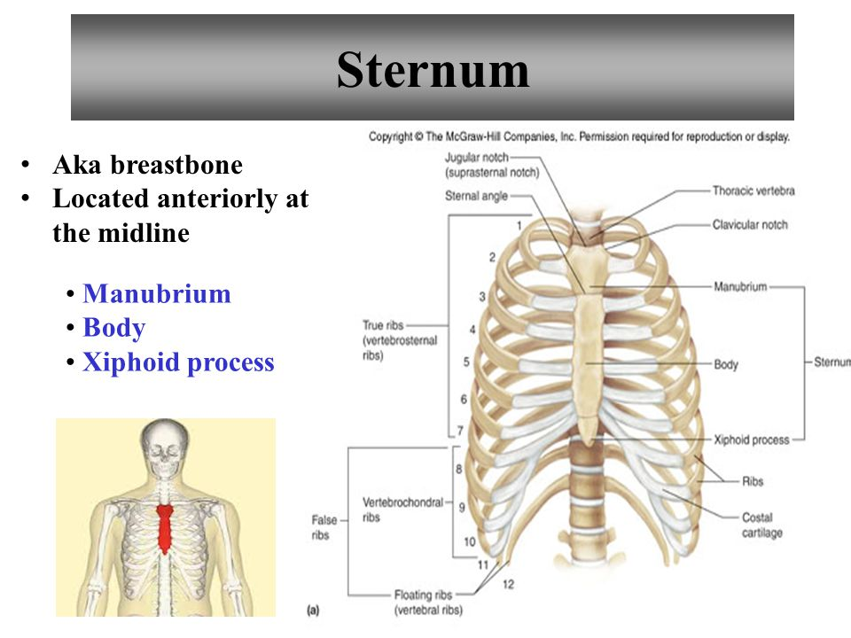 5 Sternum Manubrium Body Xiphoid process Aka breastbone Located anteriorly at the midline