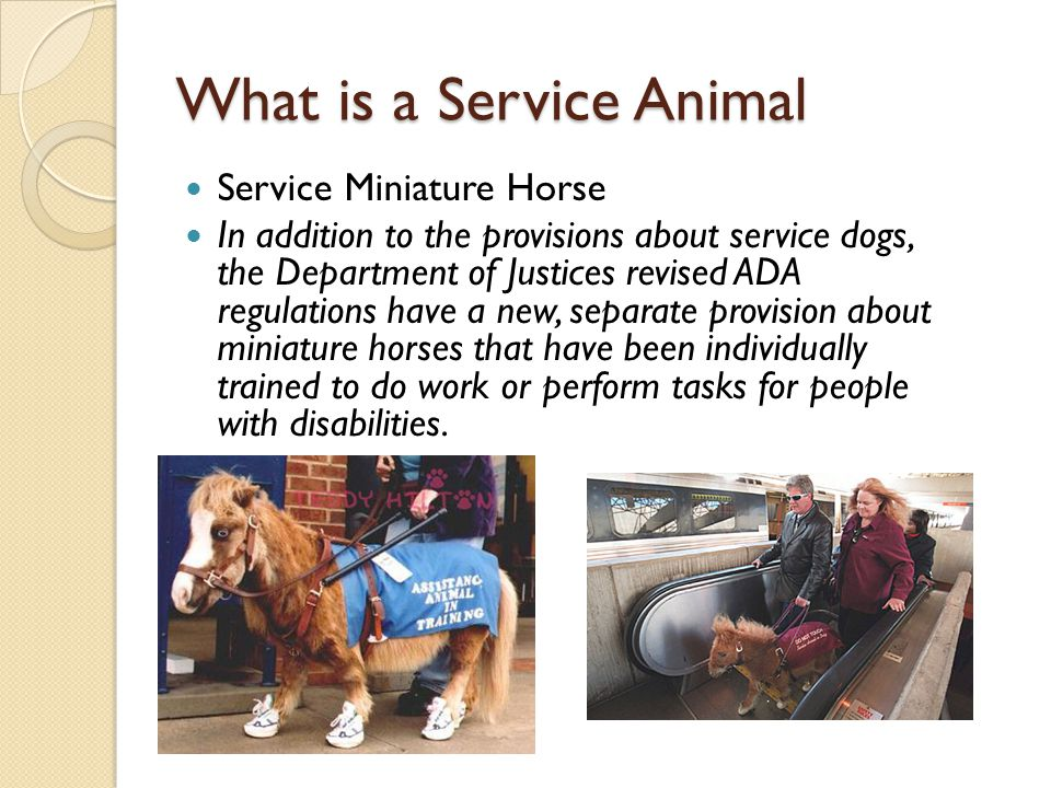What is a Service Animal Service Miniature Horse In addition to the provisions about service dogs, the Department of Justices revised ADA regulations