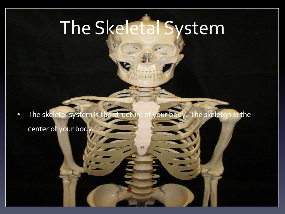 The Skeletal System The skeletal system is the structure of your body.