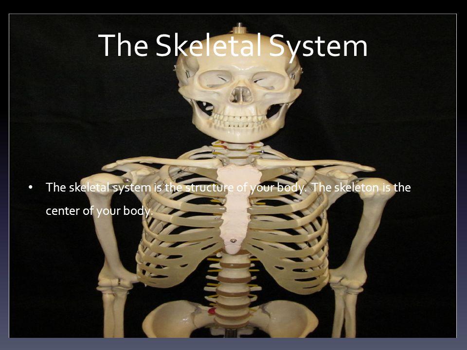 Your Arm Bones Your arm bones help support your arm muscles.