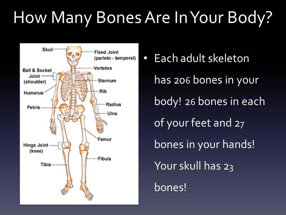 Do blood vessels go through your bones.