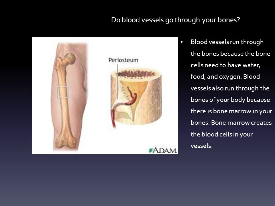 Do blood vessels go through your bones? Blood vessels run through the bones because the bone cells need to have water, food, and oxygen. Blood vessels
