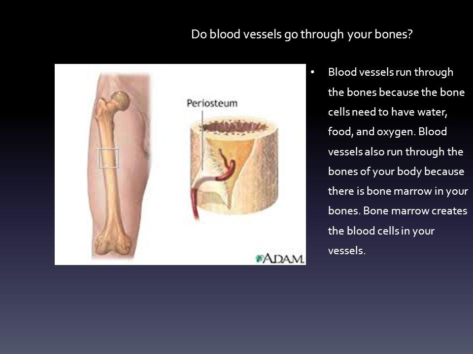 Your Leg Bones The leg bones help you walk, swim, kick, and run.