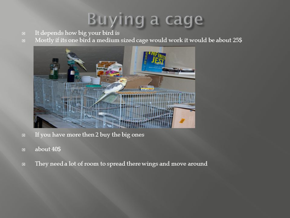  It depends how big your bird is  Mostly if its one bird a medium sized cage would work it would be about 25$  If you have more then 2 buy the big ones  about 40$  They need a lot of room to spread there wings and move around