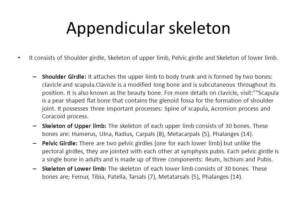 Appendicular skeleton It consists of Shoulder girdle, Skeleton of upper limb, Pelvic girdle and Skeleton of lower limb. – Shoulder Girdle: It attaches