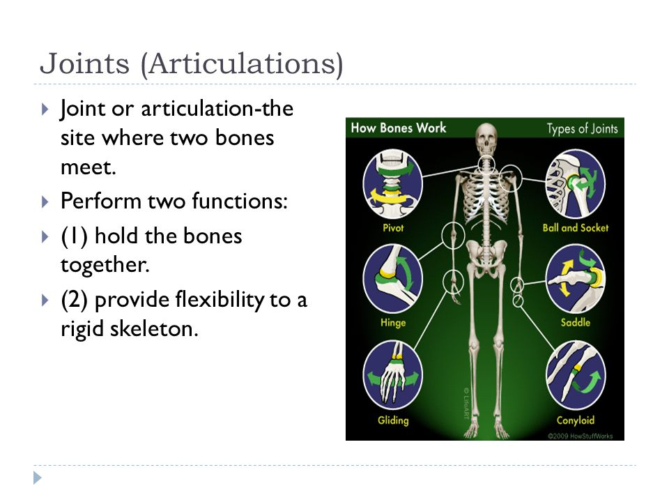 Joints (Articulations)  Joint or articulation-the site where two bones meet.  Perform two functions:  (1) hold the bones together.  (2) provide fl