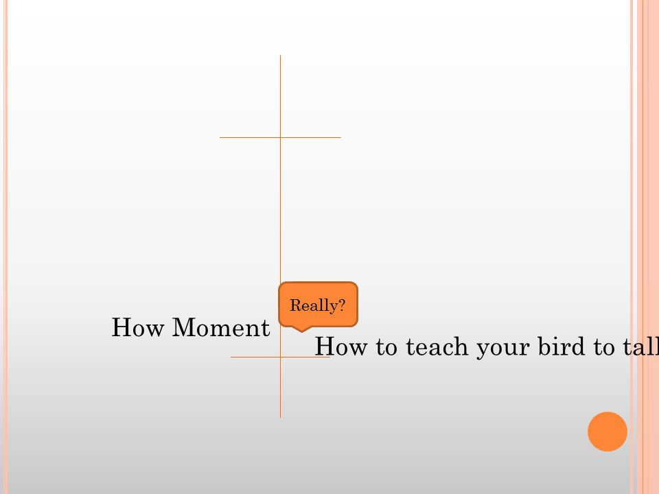 How Moment How to teach your bird to talk. Really
