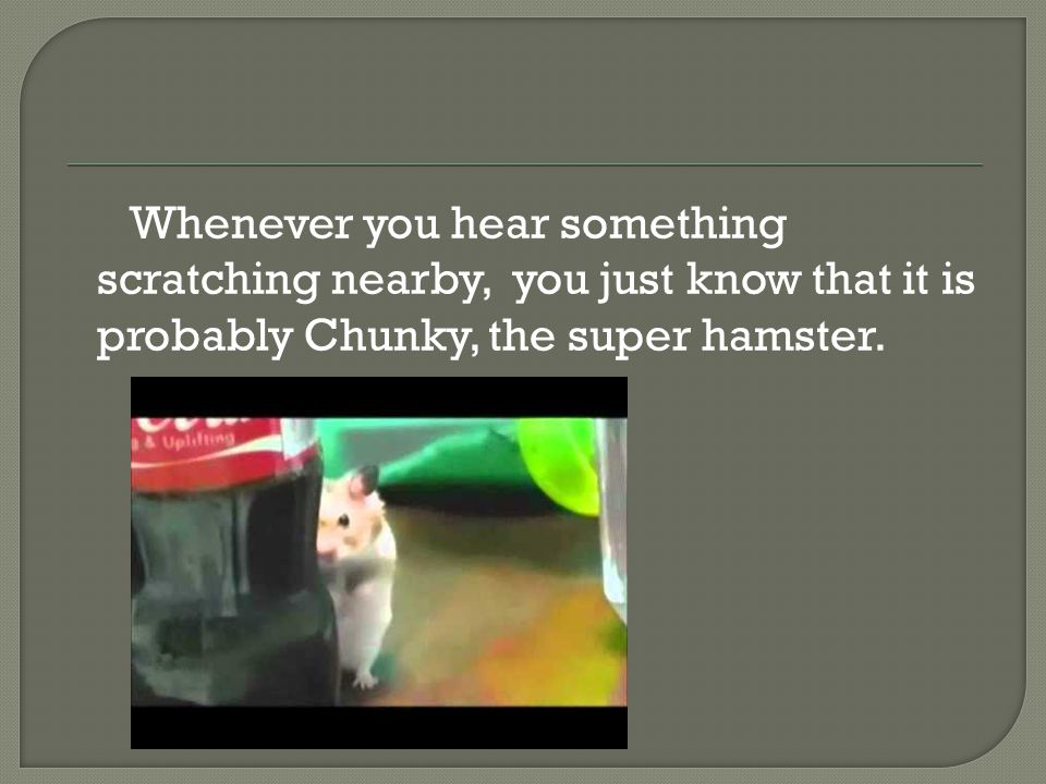 Whenever you hear something scratching nearby, you just know that it is probably Chunky, the super hamster.