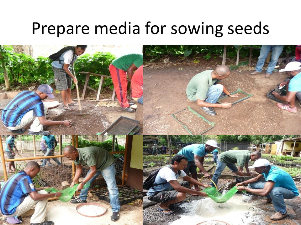Prepare media for sowing seeds