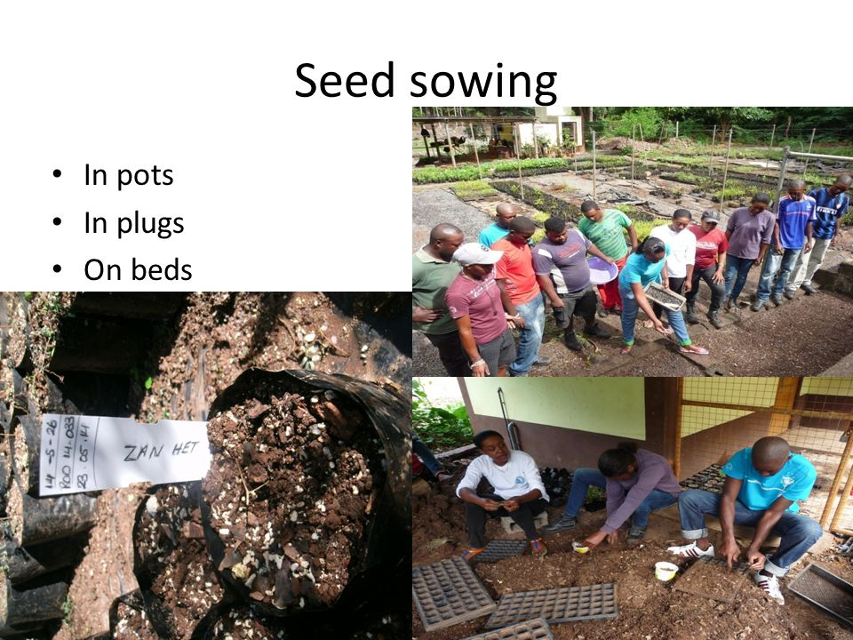 Seed sowing In pots In plugs On beds