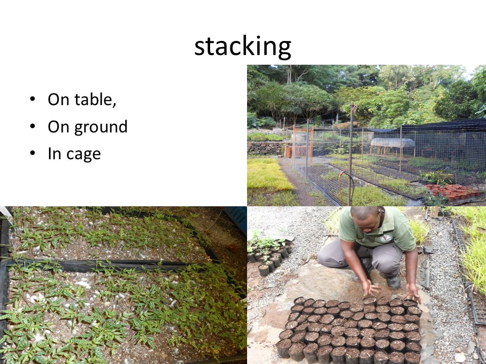 stacking On table, On ground In cage