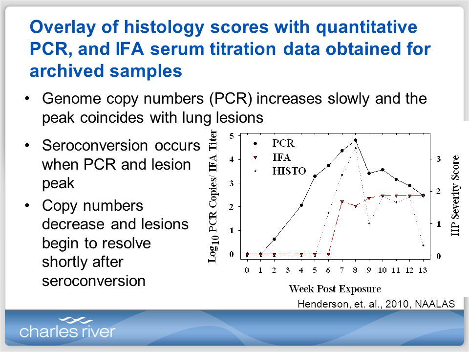 Overlay of histology scores with quantitative PCR, and IFA serum titration data obtained for archived samples Seroconversion occurs when PCR and lesion peak Copy numbers decrease and lesions begin to resolve shortly after seroconversion Genome copy numbers (PCR) increases slowly and the peak coincides with lung lesions Henderson, et.