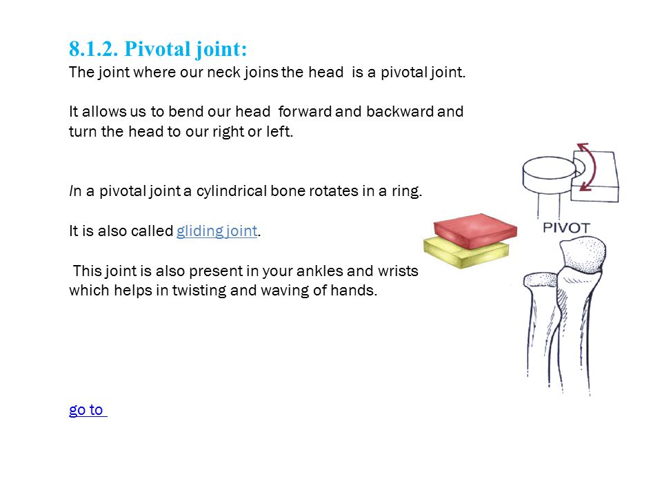 8.1.2. Pivotal joint: The joint where our neck joins the head is a pivotal joint. It allows us to bend our head forward and backward and turn the head