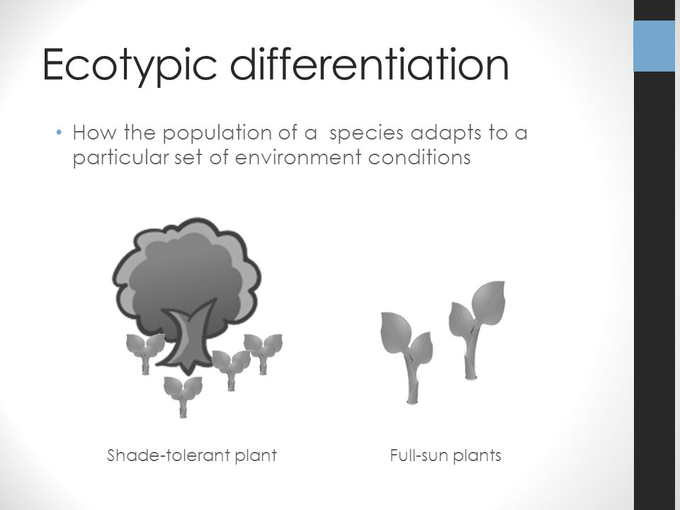 Ecotypic differentiation How the population of a species adapts to a particular set of environment conditions Shade-tolerant plantFull-sun plants
