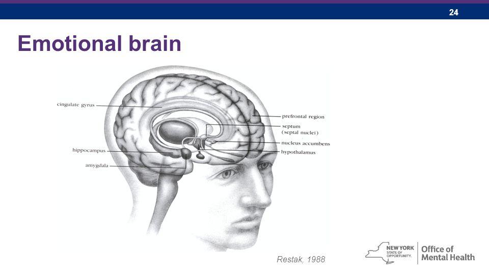 24 Emotional brain Restak, 1988