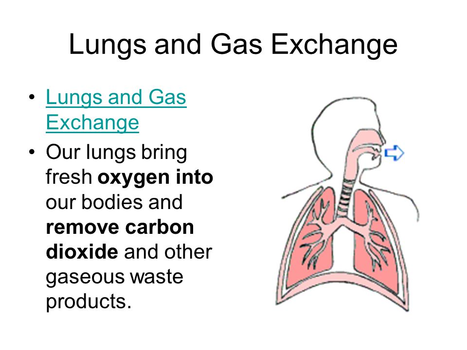 Lungs and Gas Exchange Lungs and Gas Exchange Our lungs bring fresh oxygen into our bodies and remove carbon dioxide and other gaseous waste products.