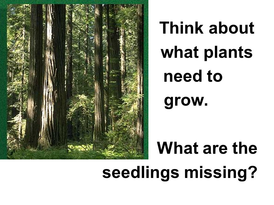 Think about what plants need to grow. What are the seedlings missing?