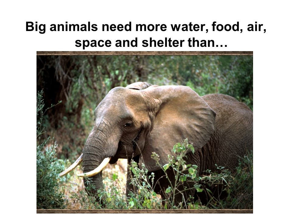 Big animals need more water, food, air, space and shelter than…