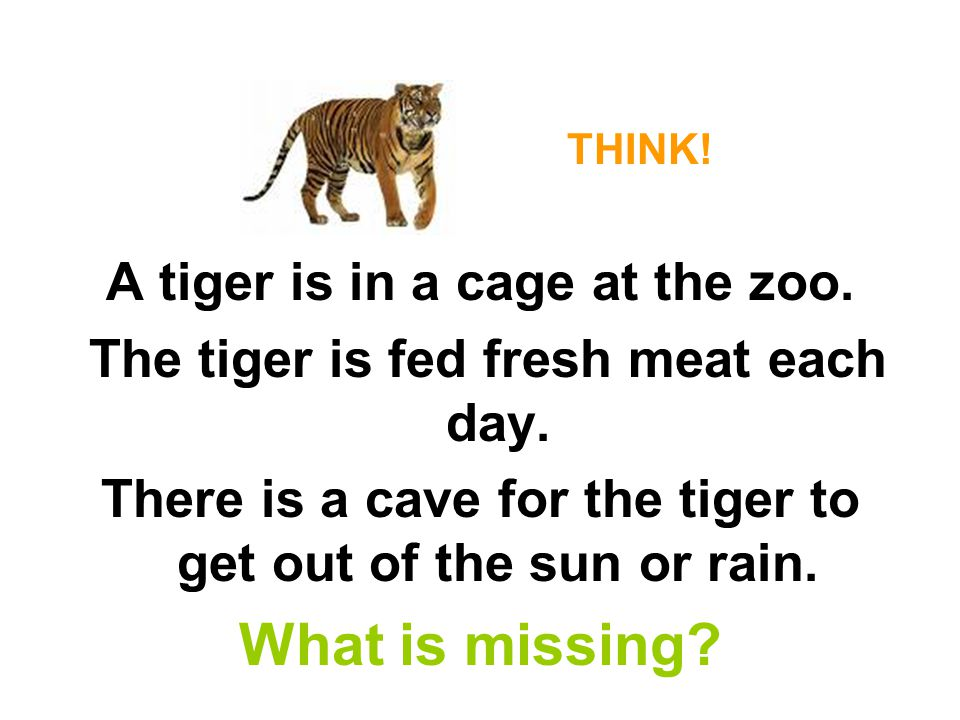 THINK.A tiger is in a cage at the zoo. The tiger is fed fresh meat each day.