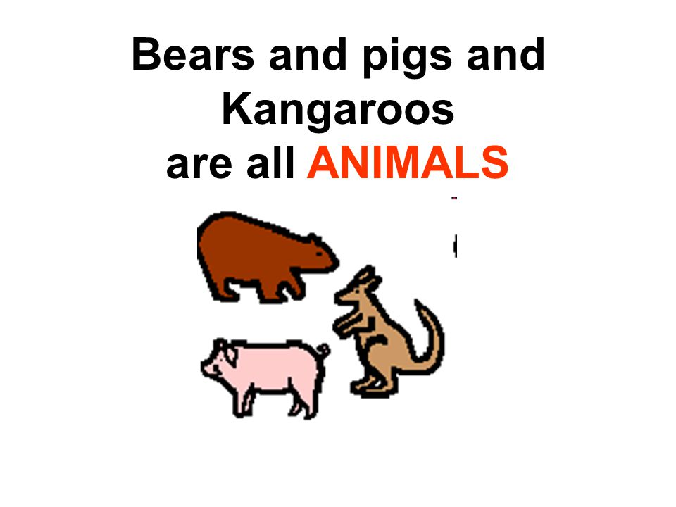 Bears and pigs and Kangaroos are all ANIMALS