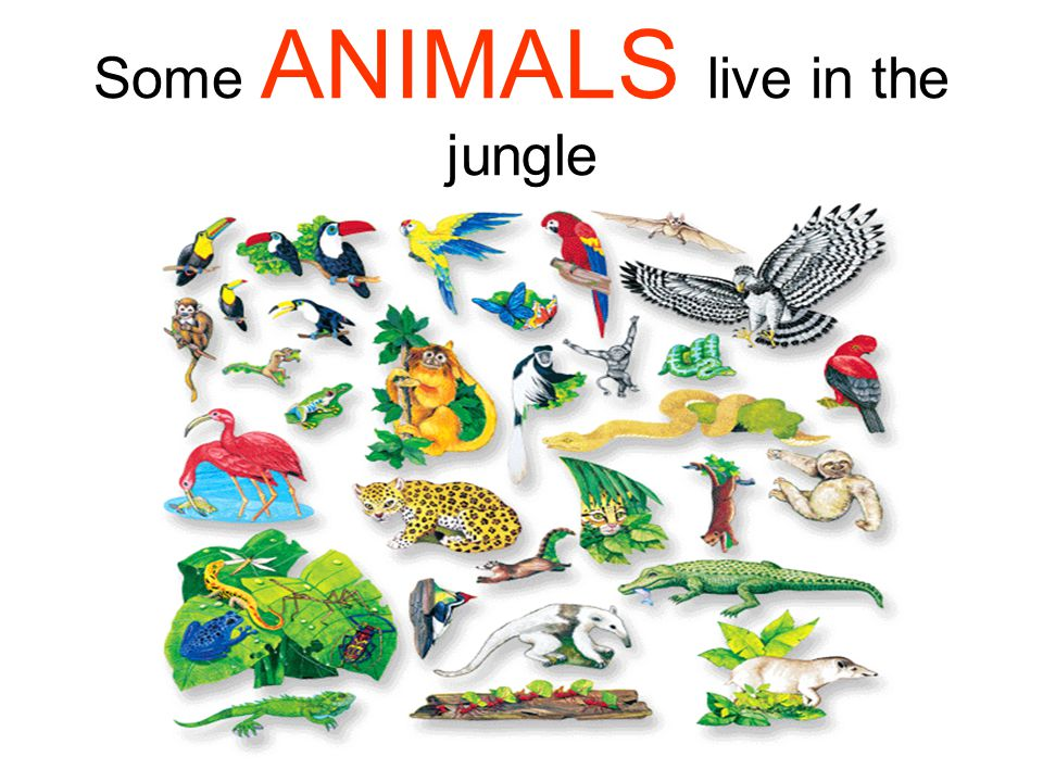 Some ANIMALS live in the jungle