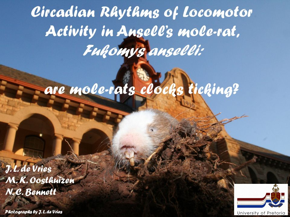 Circadian Rhythms of Locomotor Activity in Ansell's mole-rat, Fukomys anselli: are mole-rats clocks ticking? J. L. de Vries M. K. Oosthuizen N. C. Ben