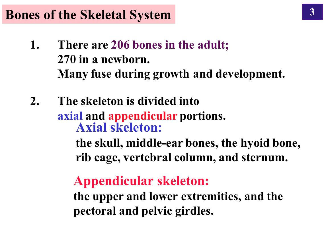 3 1. There are 206 bones in the adult; 270 in a newborn. Many fuse during growth and development. 2. The skeleton is divided into axial and appendicul