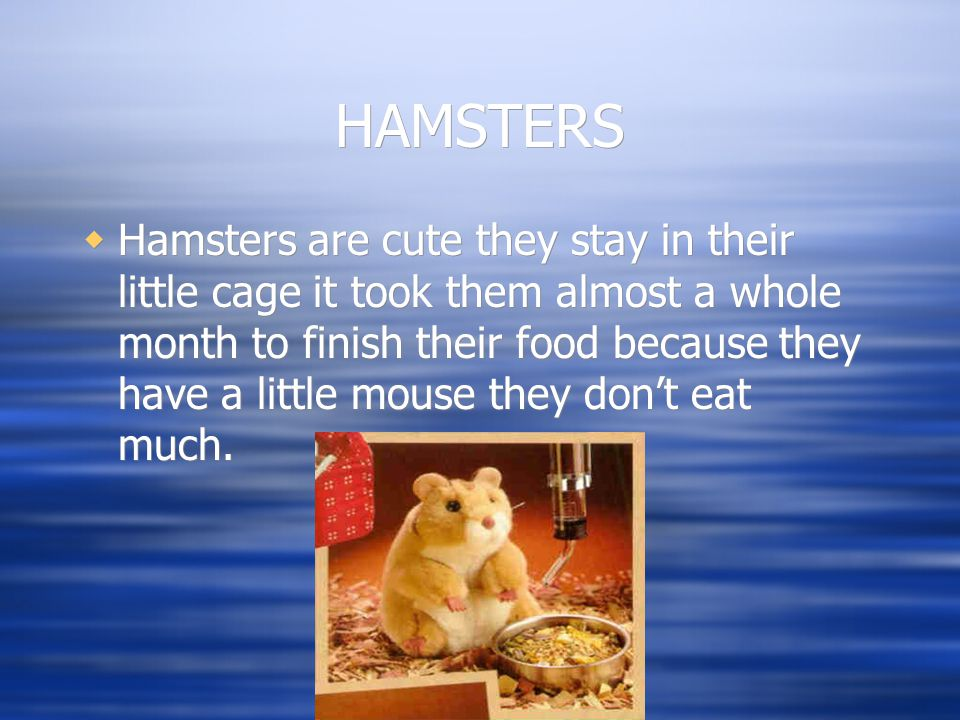 HAMSTERS  Hamsters are cute they stay in their little cage it took them almost a whole month to finish their food because they have a little mouse they don't eat much.