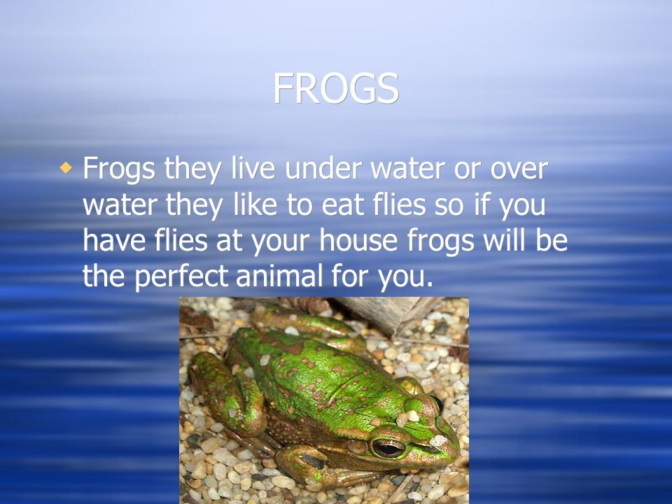 FROGS  Frogs they live under water or over water they like to eat flies so if you have flies at your house frogs will be the perfect animal for you.