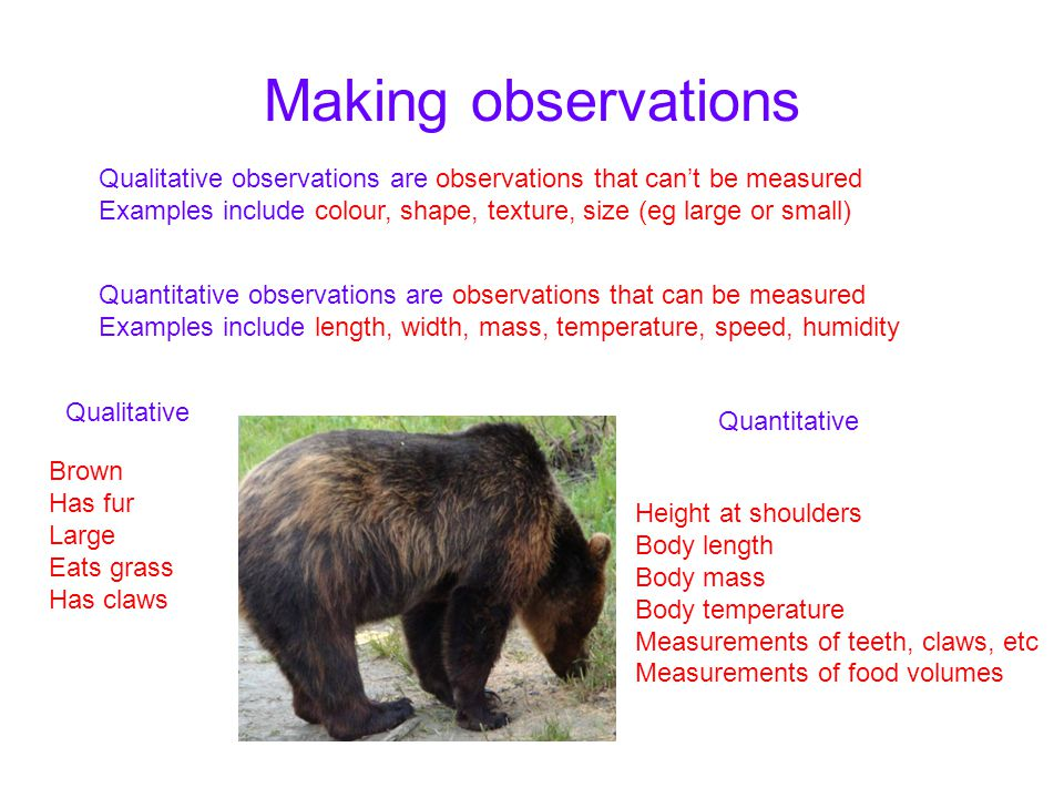 Making observations Quantitative observations are observations that can be measured Examples include length, width, mass, temperature, speed, humidity Qualitative observations are observations that can't be measured Examples include colour, shape, texture, size (eg large or small) Qualitative Quantitative Brown Has fur Large Eats grass Has claws Height at shoulders Body length Body mass Body temperature Measurements of teeth, claws, etc Measurements of food volumes