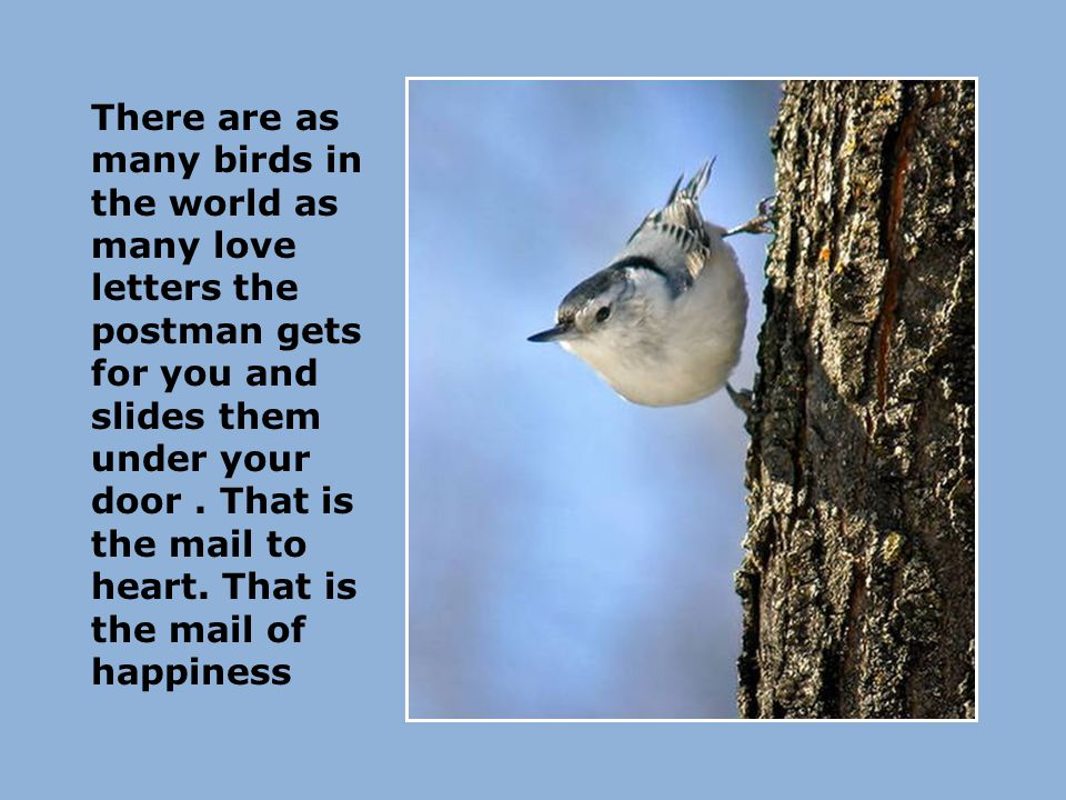 There are as many birds in the world as many love letters the postman gets for you and slides them under your door.