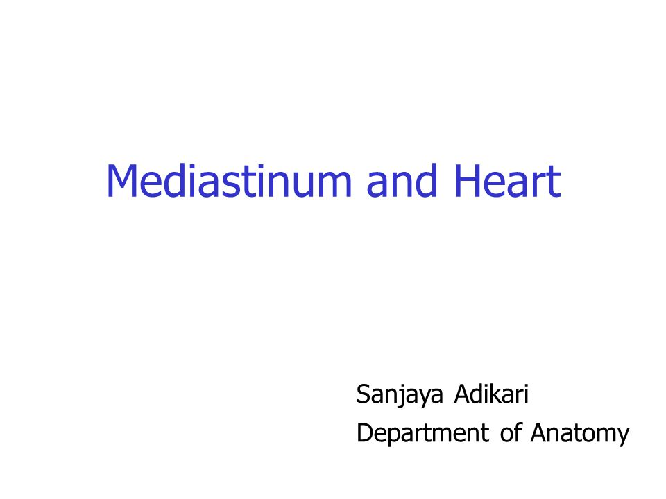 Mediastinum and Heart Sanjaya Adikari Department of Anatomy