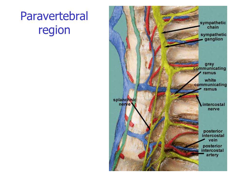 Paravertebral region
