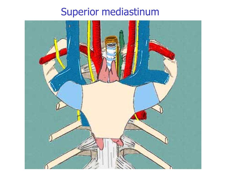 Superior mediastinum