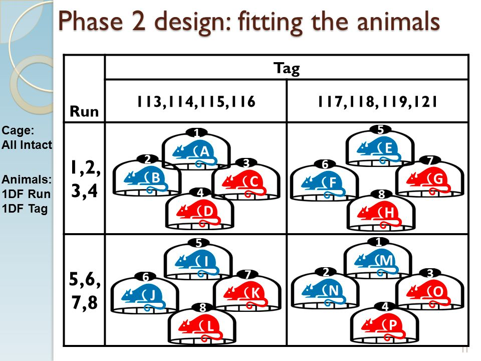 Phase 2 design: fitting the animals Run Tag 113,114,115,116117,118, 119,121 1,2, 3,4 5,6, 7,8 1 3 2 4 5 7 6 8 1 3 2 4 5 7 6 8 11 ACBD EGFH M O NPI K JL Cage: All Intact Animals: 1DF Run 1DF Tag