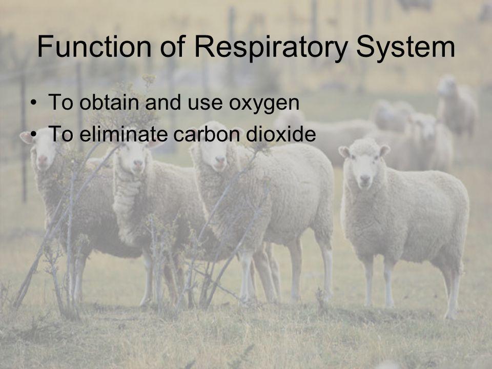 Animal Respiration