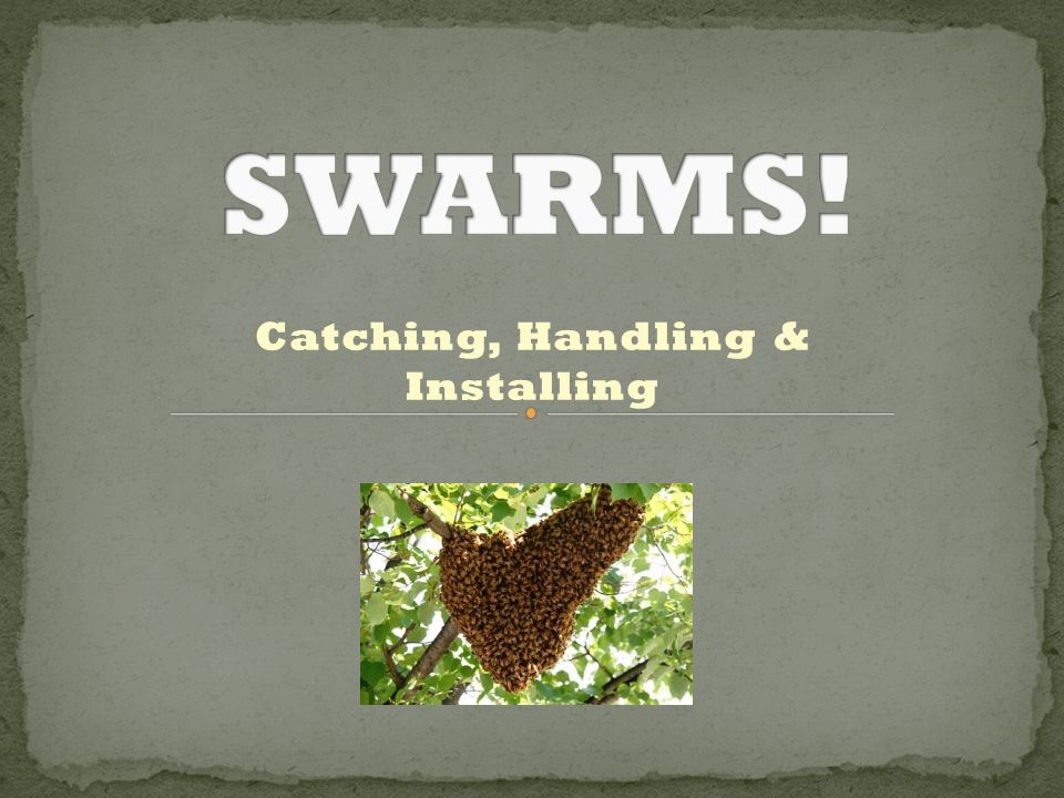 Catching, Handling & Installing
